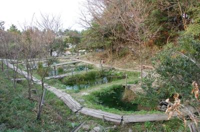 うみべの森の春    by  (TATE-misaki)_c0108460_1747113.jpg