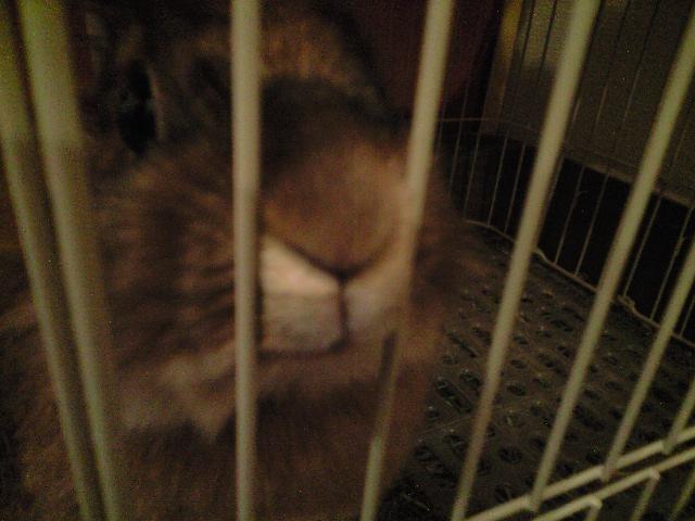 ミニウサギの_c0151965_0101175.jpg