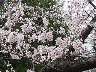 行く公園での花です_b0112380_2205838.jpg