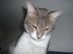 猫達_b0112380_2210753.jpg