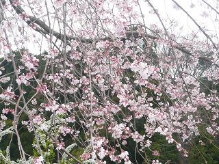 行く公園での花です_b0112380_2215634.jpg