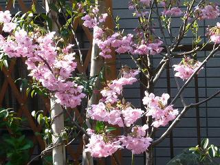 行く公園での花です_b0112380_2224546.jpg