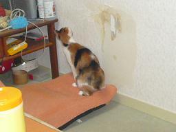 猫達_b0112380_226981.jpg