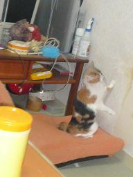 猫達_b0112380_2272571.jpg