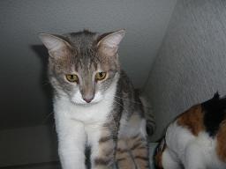 猫達_b0112380_2285423.jpg