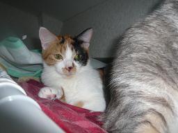 猫達_b0112380_2292079.jpg
