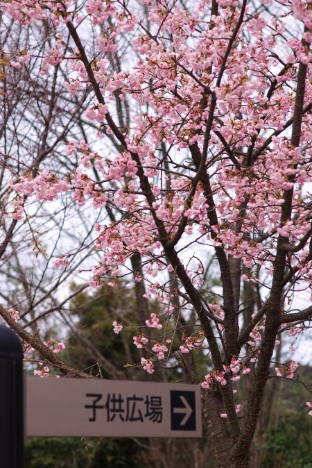 運動公園の桜_f0138600_19401636.jpg