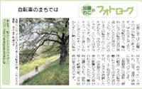 今週のフォトローグ「自転車のまちでは」 onリビング京都のご案内_c0069903_6273858.jpg