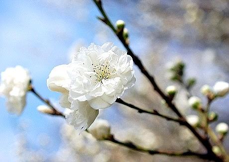 sakura*sakura_d0083623_21463378.jpg