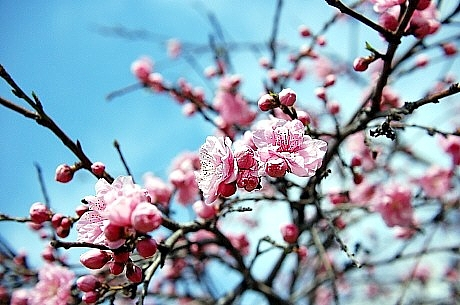 sakura*sakura_d0083623_21501399.jpg