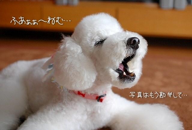 sakura*sakura_d0083623_22102729.jpg