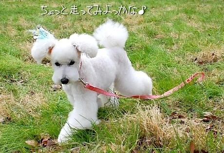 sakura*sakura_d0083623_2274782.jpg