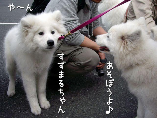 アジアインターナショナル・ドッグショー_c0062832_17162877.jpg