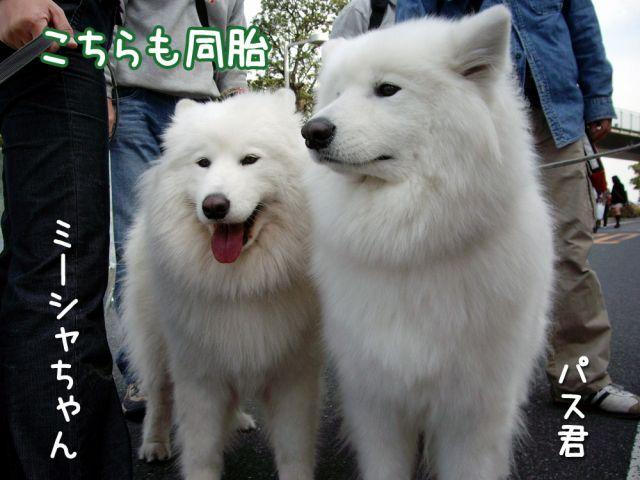 アジアインターナショナル・ドッグショー_c0062832_17171273.jpg