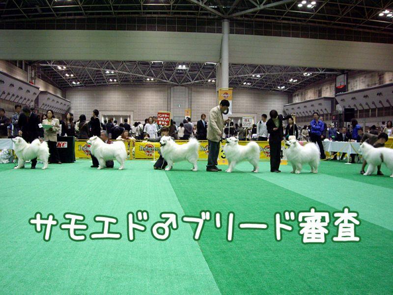 アジアインターナショナル・ドッグショー_c0062832_17292774.jpg