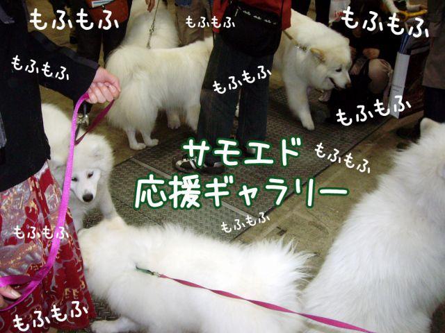 アジアインターナショナル・ドッグショー_c0062832_1793886.jpg