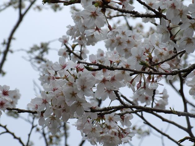 お花見に行きました。_b0089338_23242968.jpg