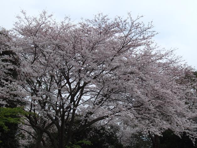 お花見に行きました。_b0089338_23243531.jpg