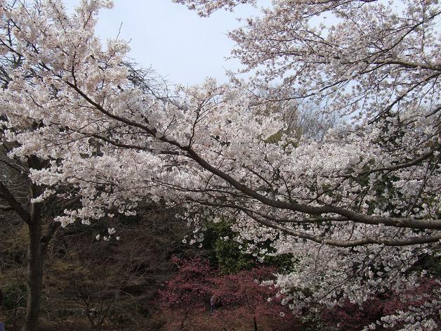 お花見に行きました。_b0089338_23245747.jpg