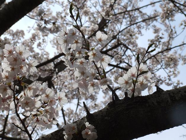お花見に行きました。_b0089338_23251299.jpg