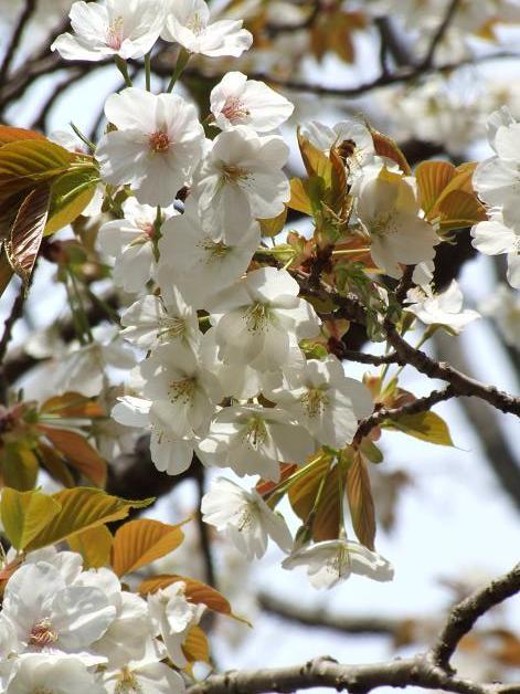 お花見に行きました。_b0089338_23252381.jpg