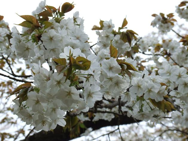 お花見に行きました。_b0089338_23253333.jpg