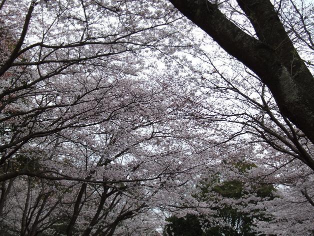 お花見に行きました。_b0089338_23261589.jpg