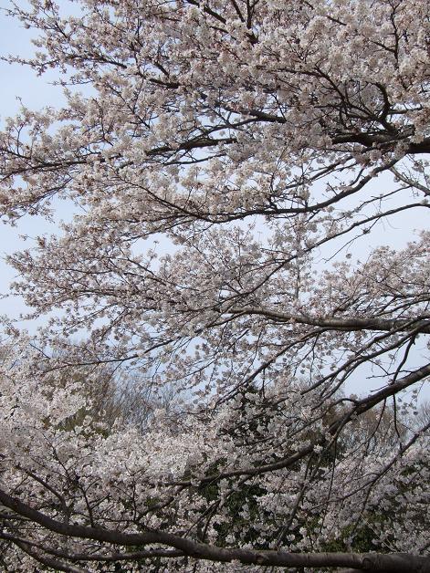 お花見に行きました。_b0089338_23262573.jpg