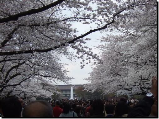 2008年上野の桜