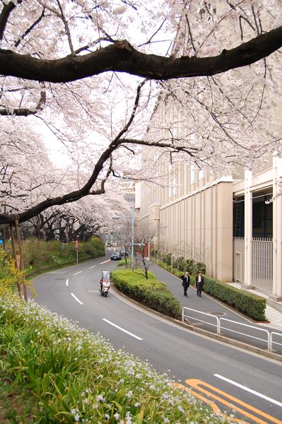 四ッ谷の桜_a0003650_1710326.jpg