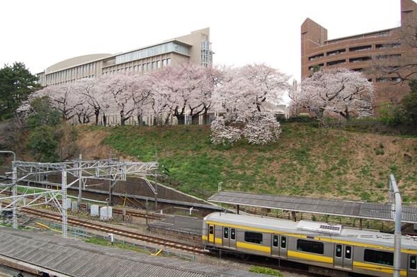 四ッ谷の桜_a0003650_1710960.jpg