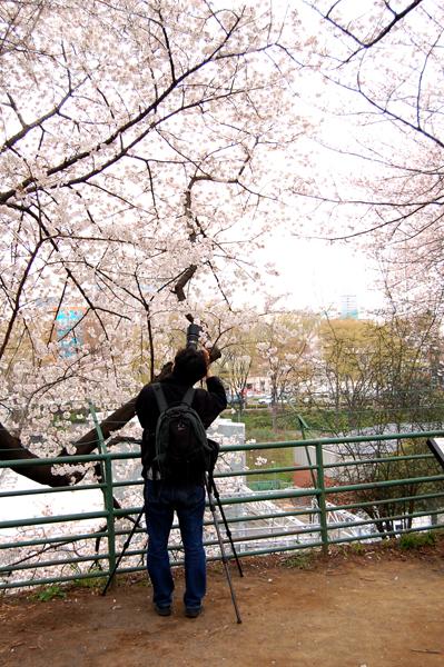 四ッ谷の桜_a0003650_17124787.jpg
