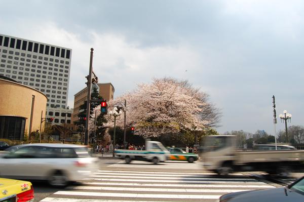 四ッ谷の桜_a0003650_17132121.jpg