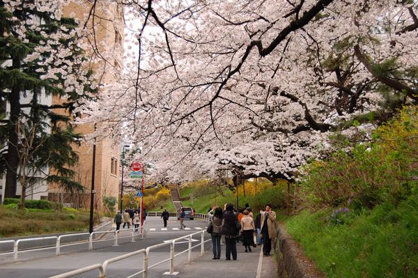 四ッ谷の桜_a0003650_17134528.jpg
