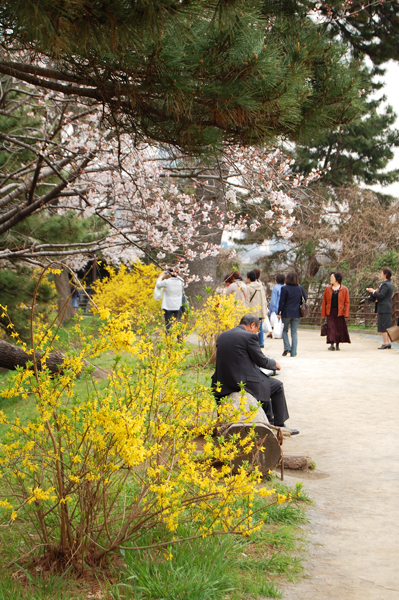 四ッ谷の桜_a0003650_17145150.jpg