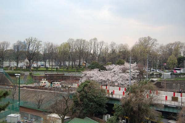 四ッ谷の桜_a0003650_17152596.jpg