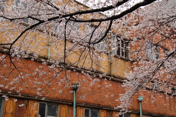 四ッ谷の桜_a0003650_17163072.jpg