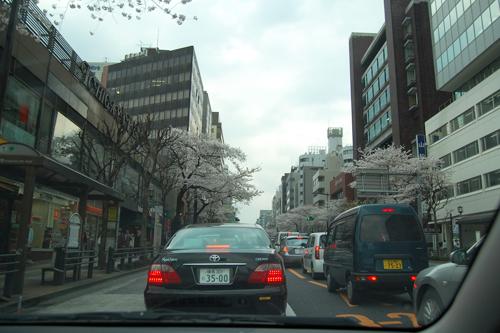 四ッ谷の桜_a0003650_17183730.jpg