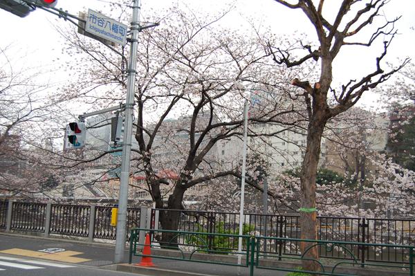 四ッ谷の桜_a0003650_1718686.jpg