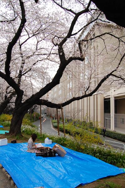 四ッ谷の桜_a0003650_17214391.jpg