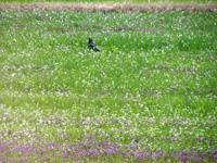 花畑になんかいる_b0115652_22493427.jpg