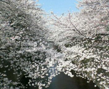 花見三味!_b0105458_2330132.jpg