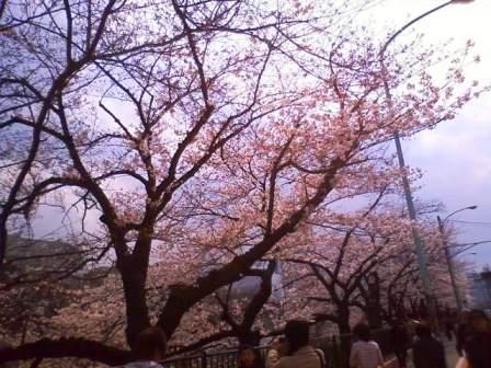 神楽坂・ちびさんぽ。_c0119259_0493699.jpg