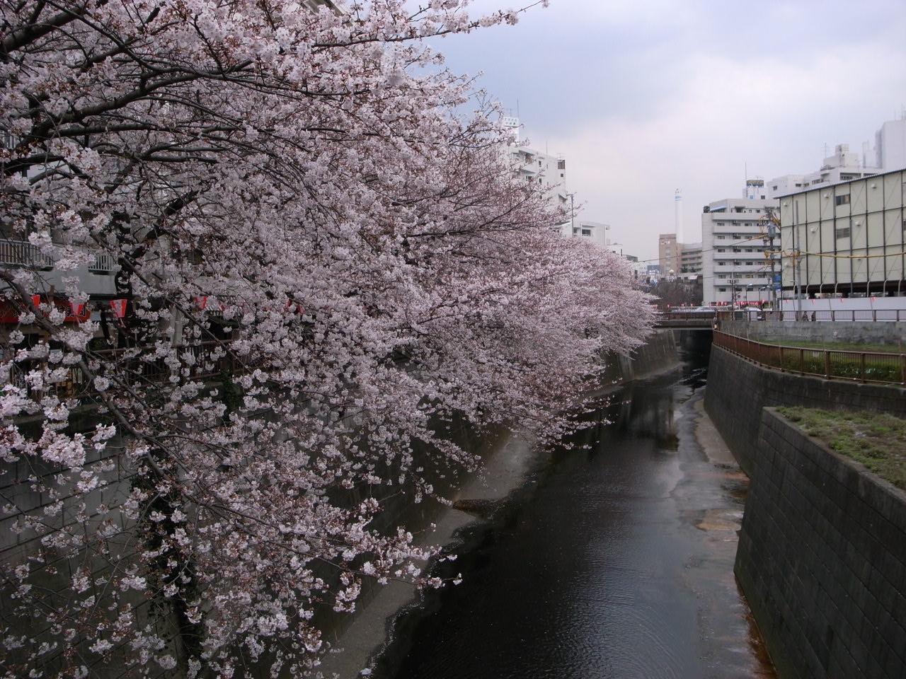 春_c0126359_8573739.jpg