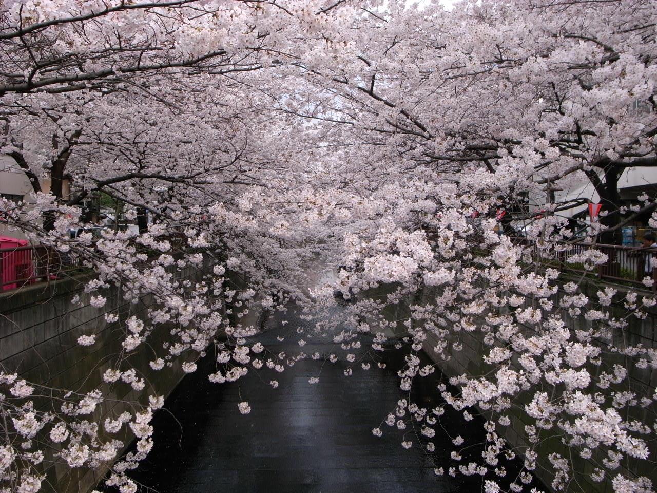 春_c0126359_92717.jpg