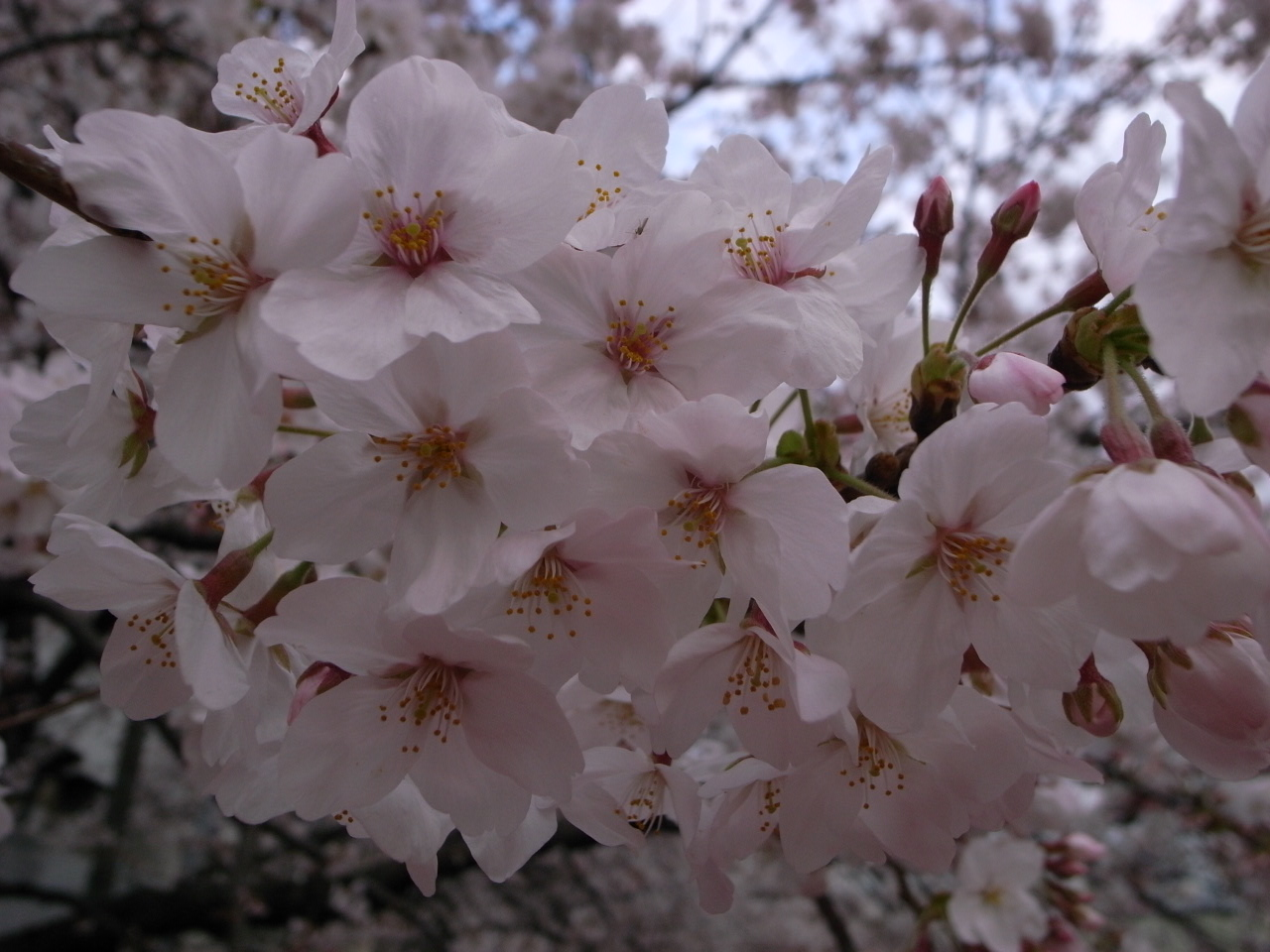 春_c0126359_945246.jpg