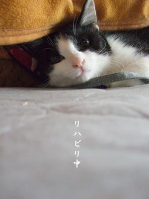 みかんちゃん、リハビリ中_a0064067_0341391.jpg