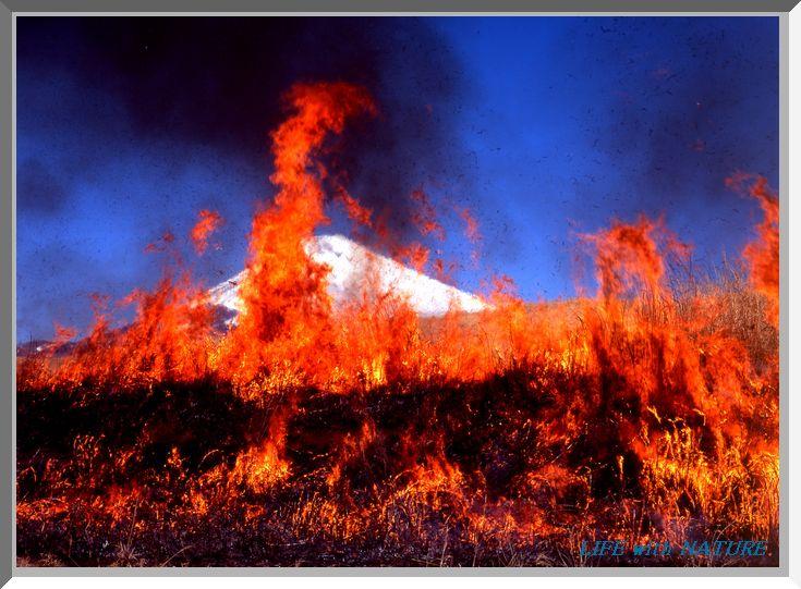 富士の野焼き_b0093088_6552463.jpg