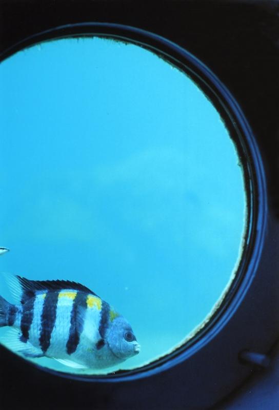 タイルは魚と同じ色_d0081890_21413470.jpg