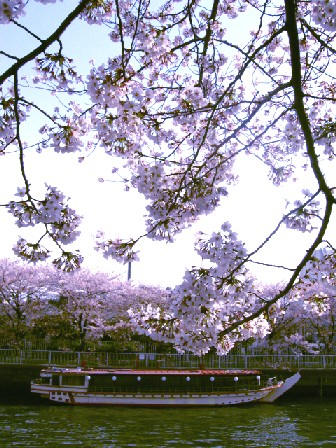 桜人           _f0061797_22323947.jpg